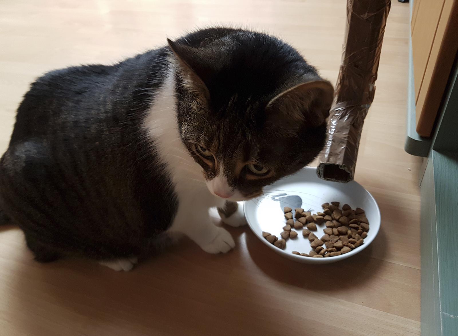 Wenn die Katze zweimal kratzt - Raspberry Pi als Helferchen #1
